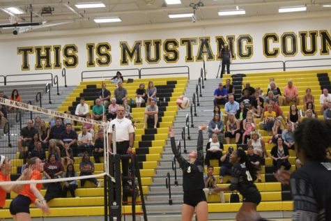 Metea Galleries: Pack the Stands