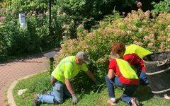 Volunteers beautify downtown Naperville