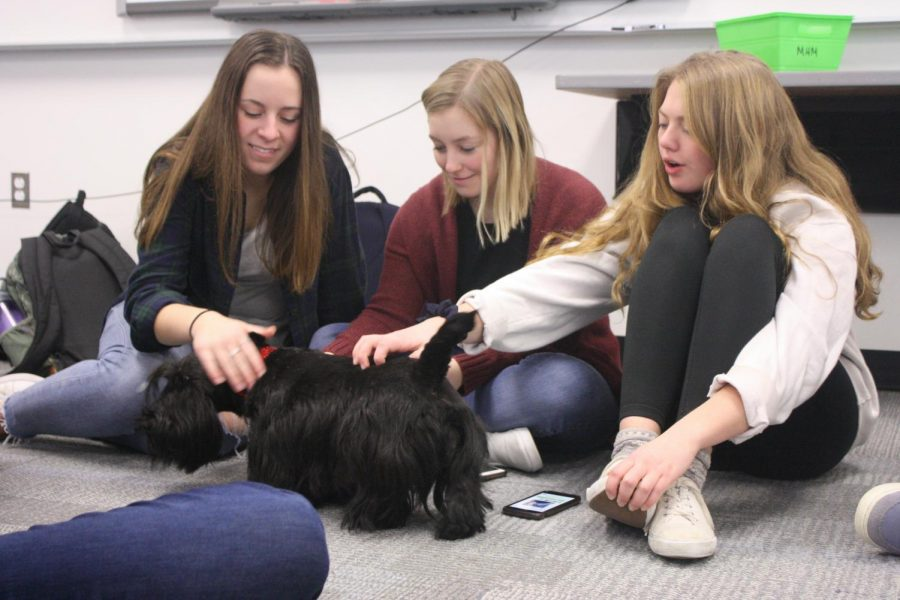 Gallery: Naperville Area Humane Society brings therapy dogs to Metea