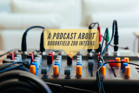 Podcast: Brookfield Zoo interns talk about their experiences